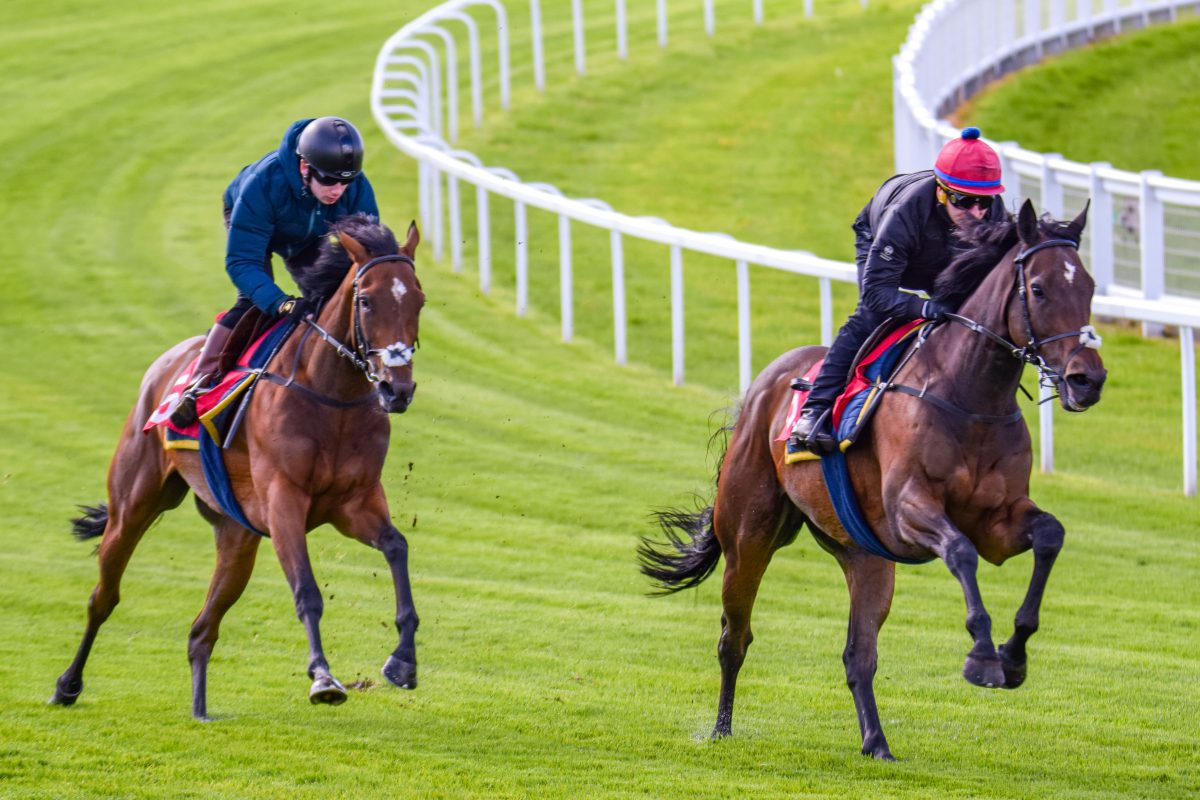 Cazoo Derby Festival Gallops Morning at Epsom Downs